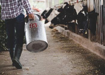 Cứ Tưởng Tốt : Sữa Động Vật