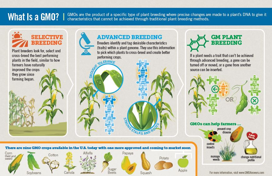 what is gmo oct 2015