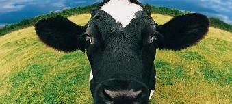 Bỏ Sữa Bò, Thay Bằng Gì?