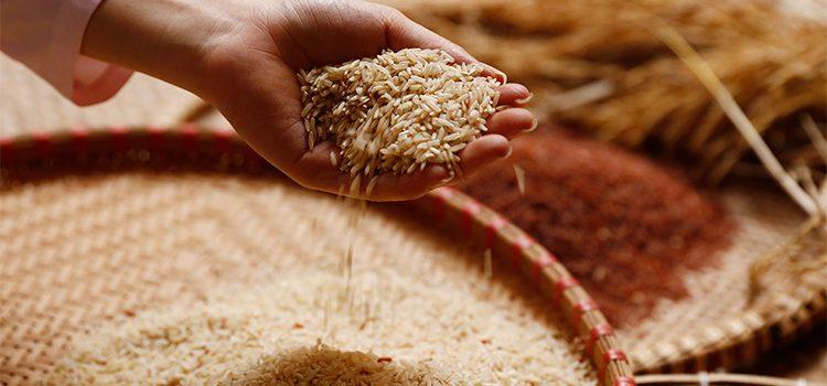 Hướng Dẫn Cách Nấu Cơm Gạo Lứt Ngon Dễ Dàng